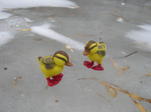 duck small